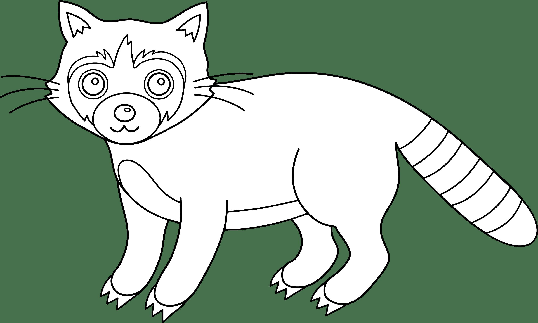 Colorable Raccoon