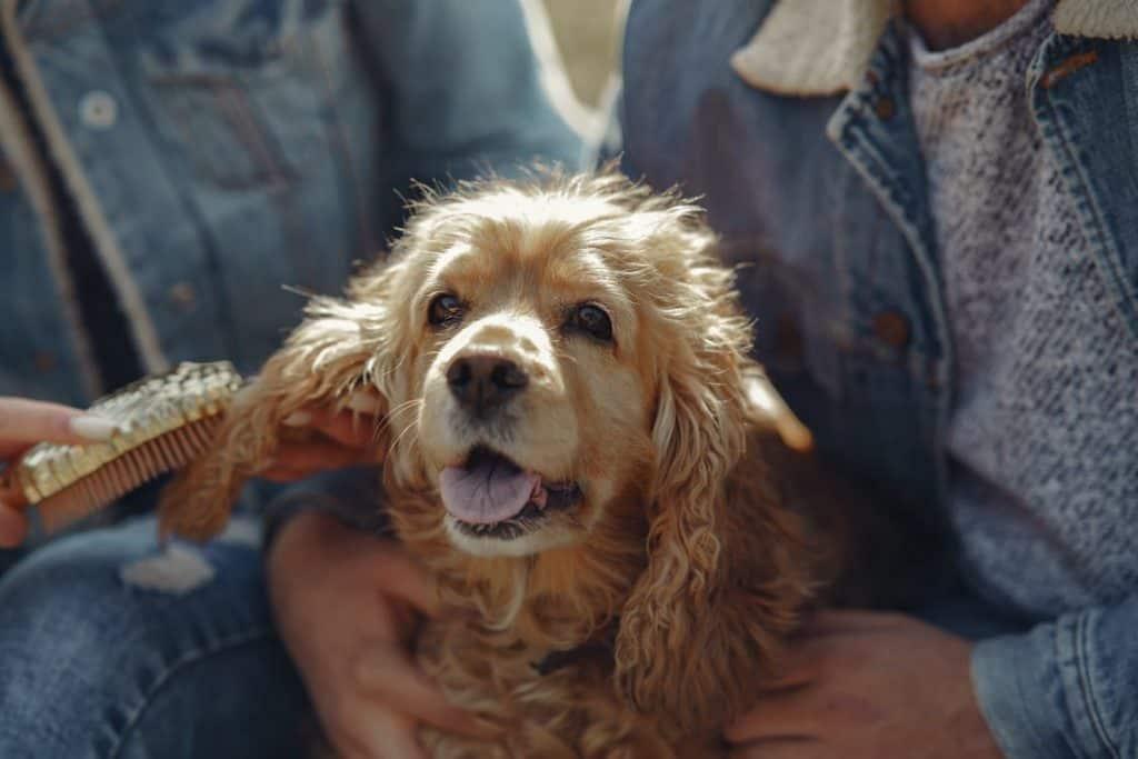 dog hair brushing
