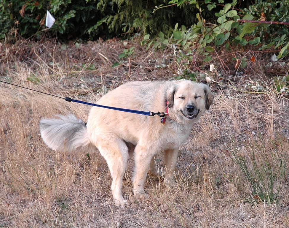 causes of diarrhea in dogs and puppies