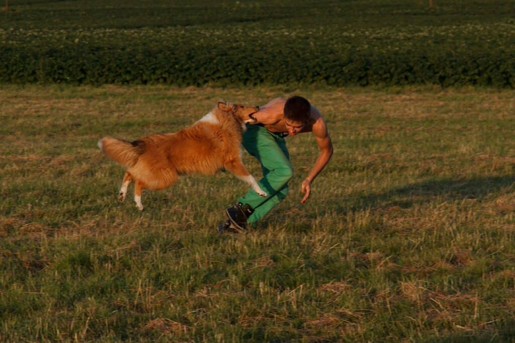 Dog's degree of excitement during the exercise