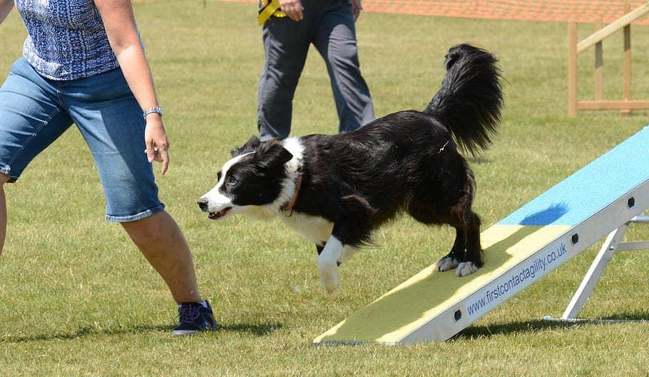 dog training session