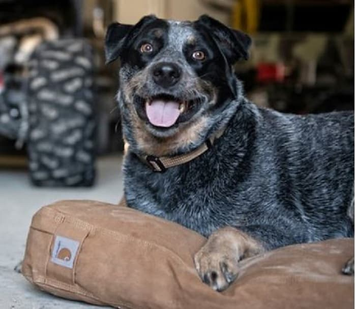 durable dog bed