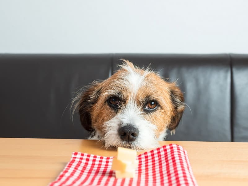 risks of dairy products for dogs