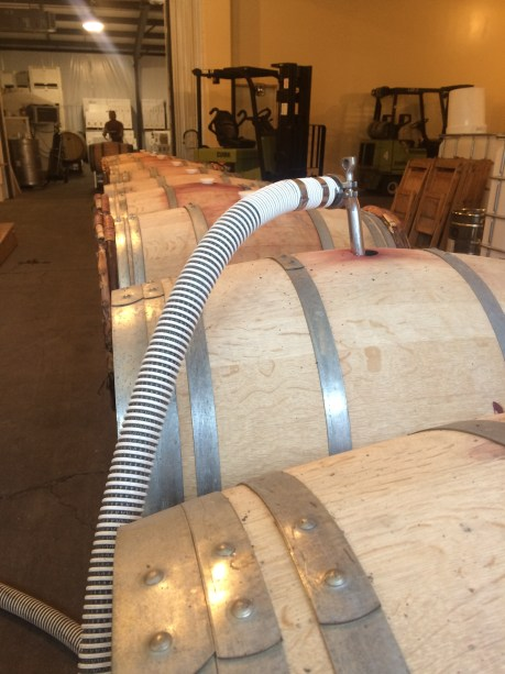 Hose with wand in a line of wine barrels.
