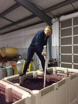 Syrah punch downs as demonstrated by Marlee, step 2.