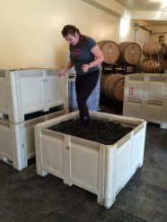 Half of the Syrah is foot stomped.