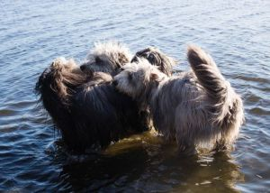 Alla tre i badet vid Steninge Slotts hundbad
