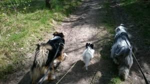 Promenad med vårat gäng