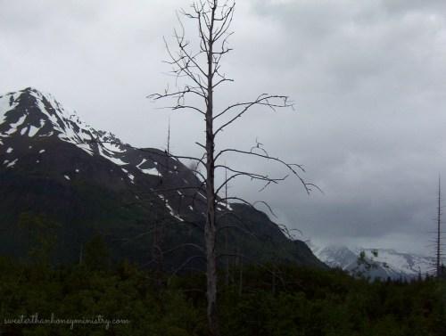 rainy alaska 2
