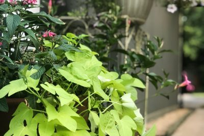 2 Tips for Your Potted Plants