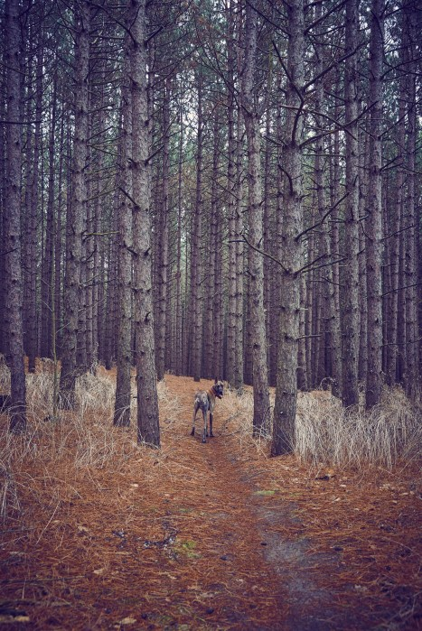 Trail hiking in mild weather with your dog - photo competition