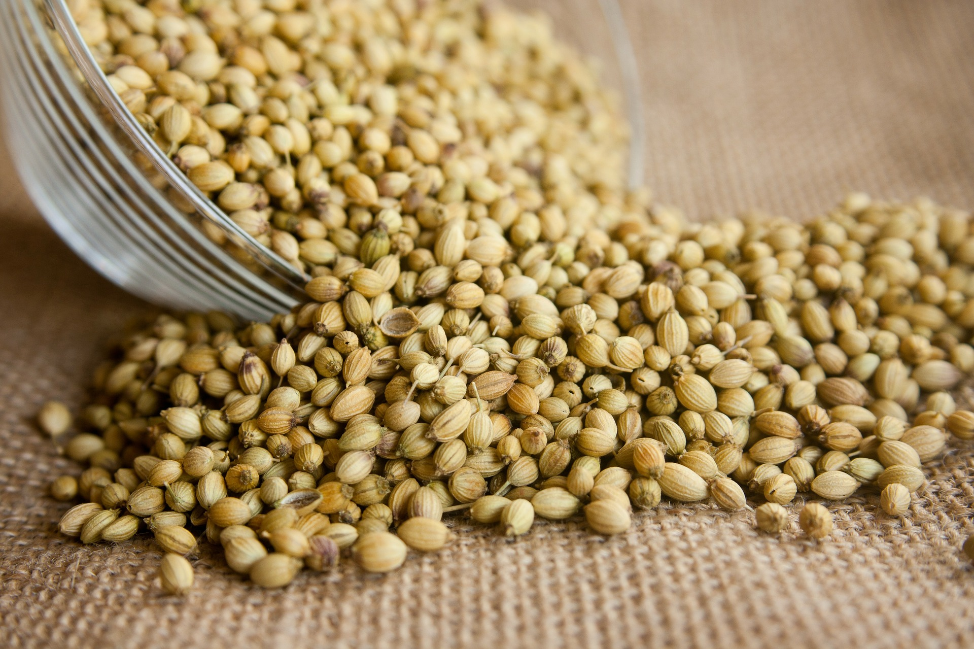 All About Oils: Coriander Seed