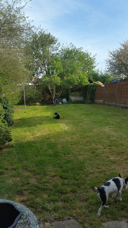 Garden before make-over