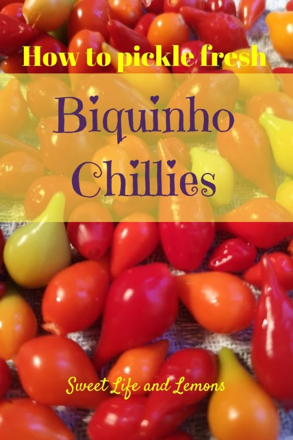 how to pickle fresh biquinho chillies