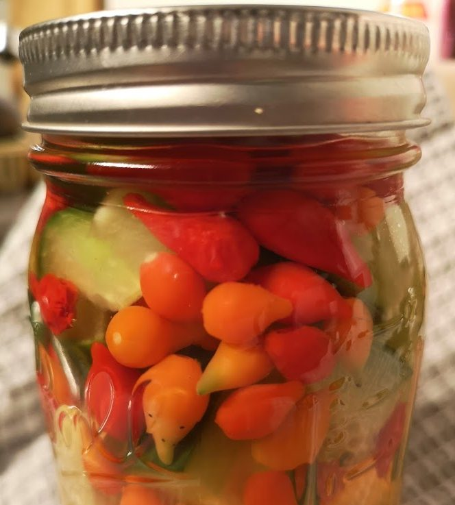 Pickled Biquinho chillies