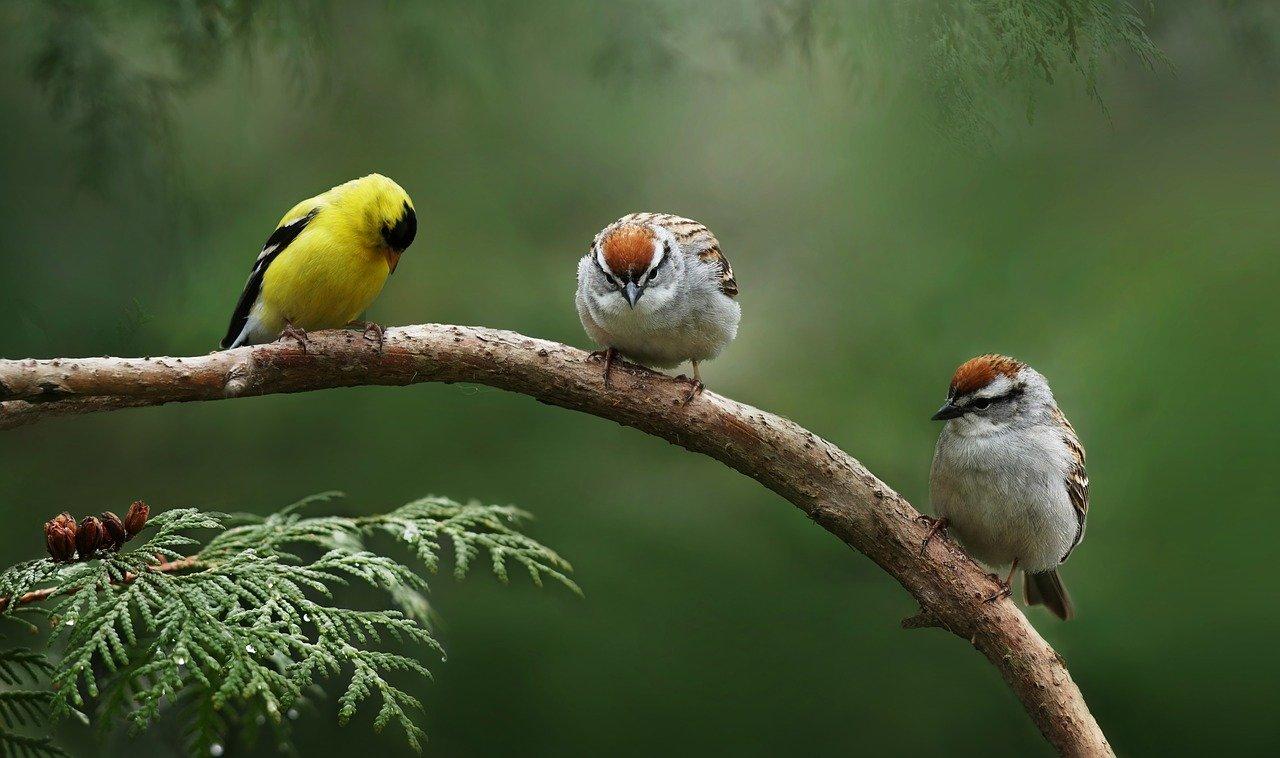 small garden birds