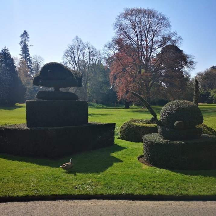Hever castle topiary