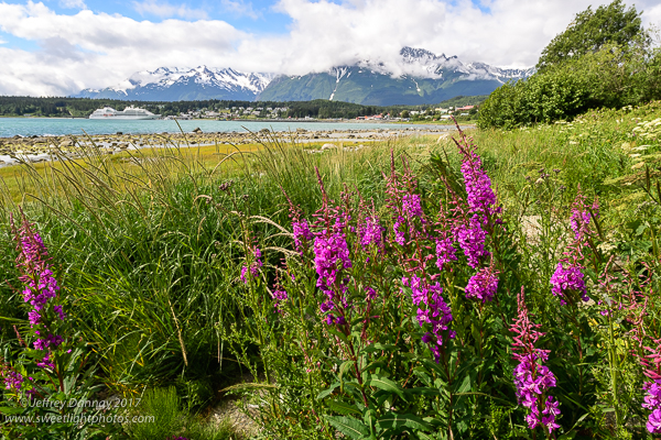 Wildflowers in Haines stole the show