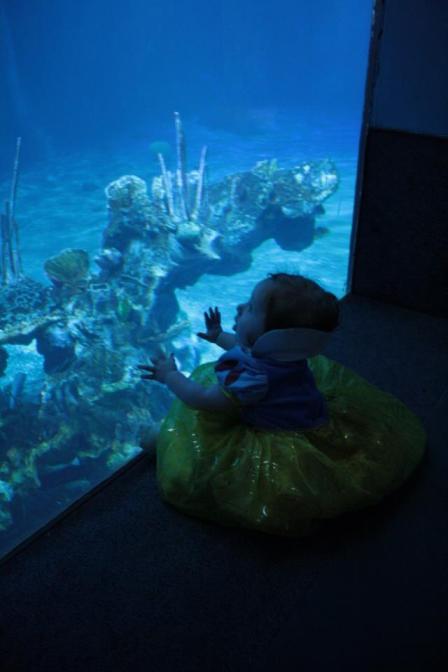 seabase epcot the seas disney