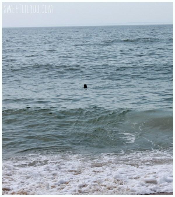 Harbor Seal in the ocean