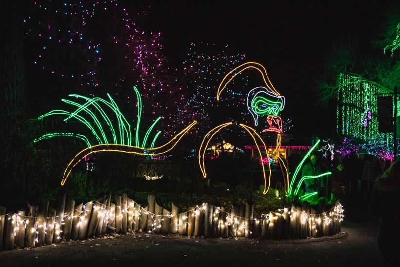 Christmas in Colorado - Denver Zoo Lights
