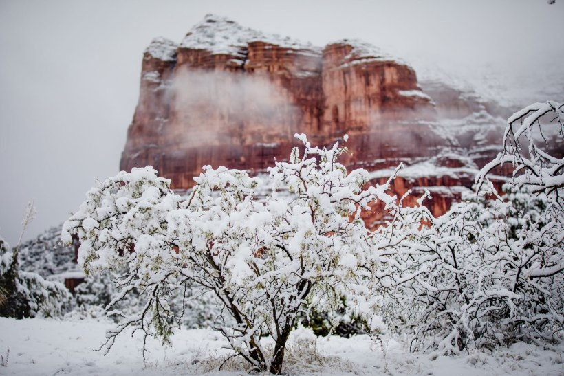 Snow covered tree in front of red rocks