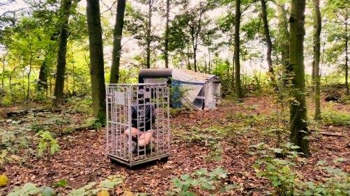 Femdom-cage