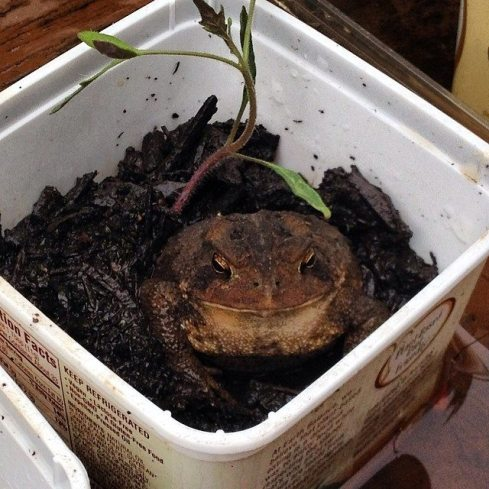frog in butter dish