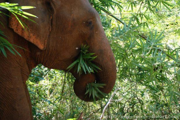 elephant-mondulkiri