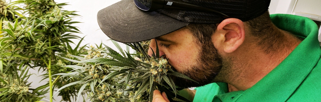 Cannabis Farm Life with Apollo Grown