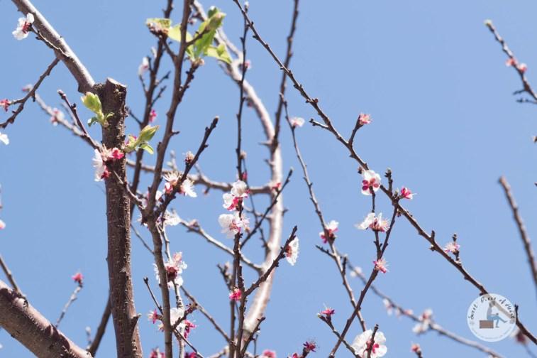 printemps-beyrouth