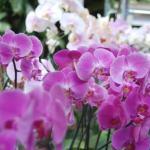 US Botanic Garden Photos