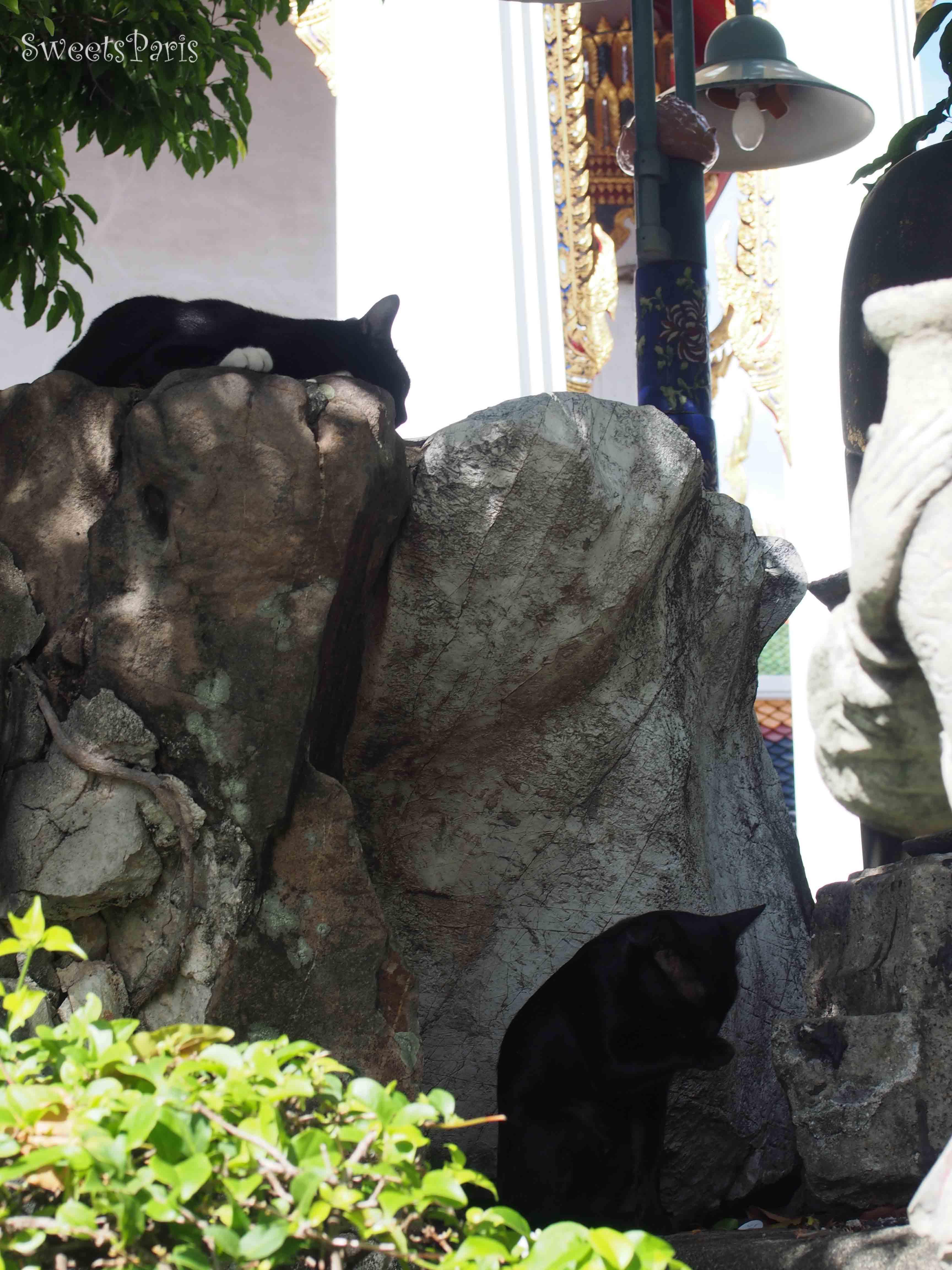 タイのバンコクとアユタヤで勝手に世界ねこ歩き