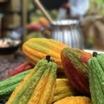 カカオ豆の「産地」とその違いによるチョコレートの「特徴」
