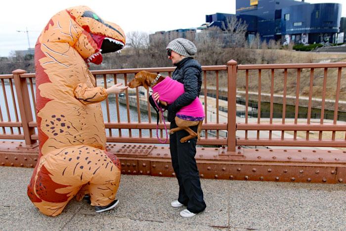 vizsla meeting a dinosaur on the stone arch bridge