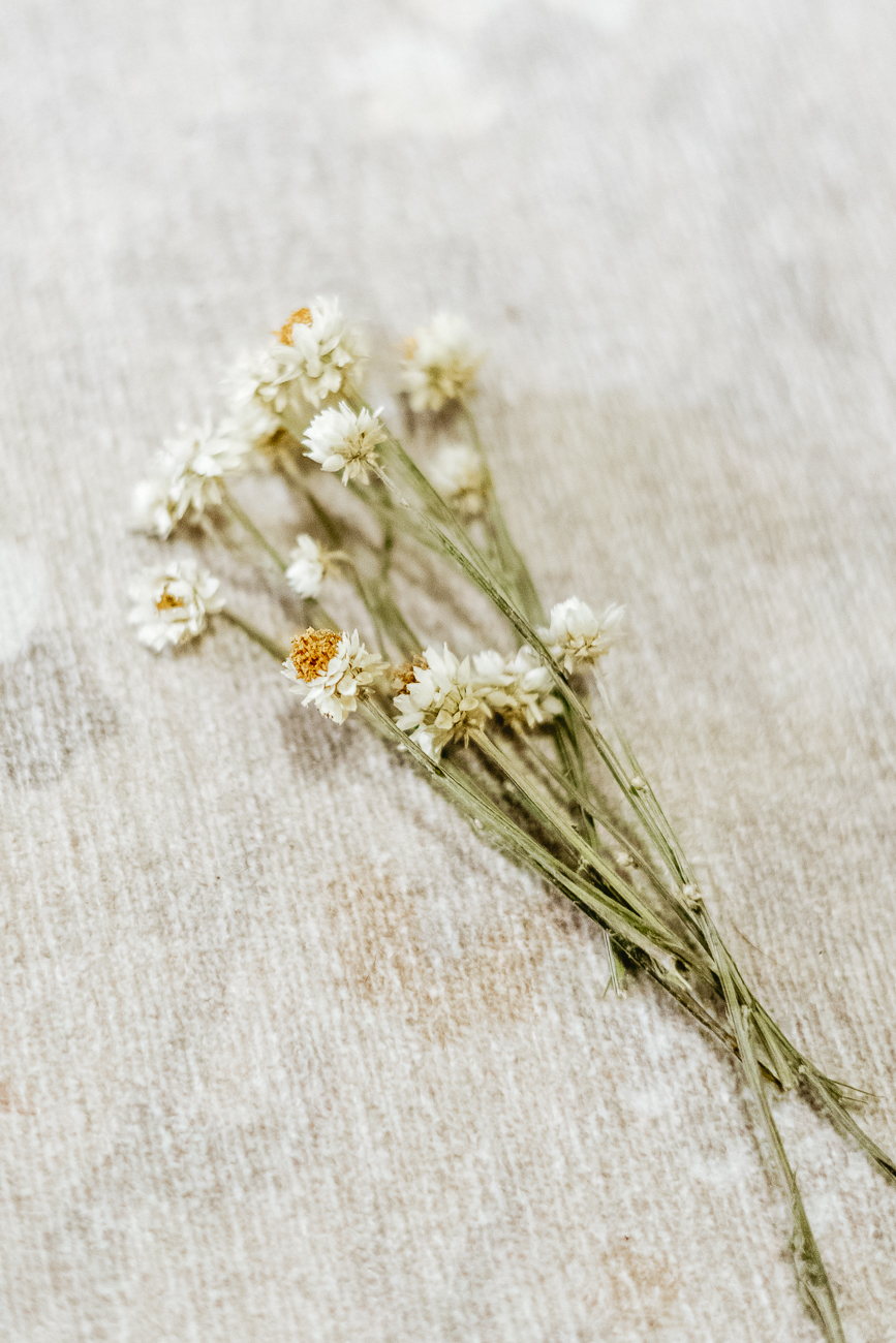 Dried white flowers