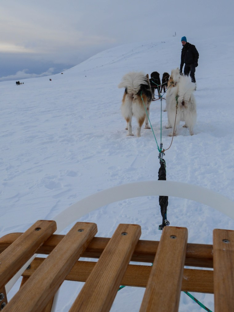 Dog Sledding in Iceland | www.sweetteasweetie.com