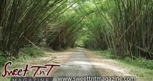 Bamboo Cathedral in Chaguaramas, Natural landscape, beautiful scene for hikers by Marika Mohammed in Sweet T&T, Sweet TnT Magazine, Trinidad and Tobago, Trini, vacation, travel