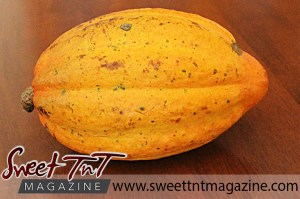 Cocoa pod in sweet T&T for Sweet TnT Magazine, Culturama Publishing Company, for news in Trinidad, in Port of Spain, Trinidad and Tobago, with positive how to photography.