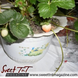 Strawberry at tableland food fiesta