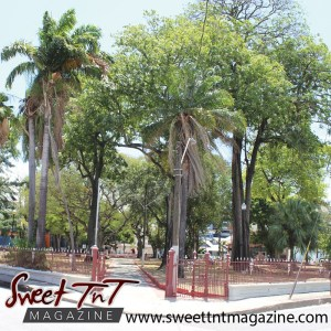 Earth Day, Trees at Lord Harris Square, PoS in sweet T&T for Sweet TnT Magazine, Culturama Publishing Company, for news in Trinidad, in Port of Spain, Trinidad and Tobago, with positive how to photography.