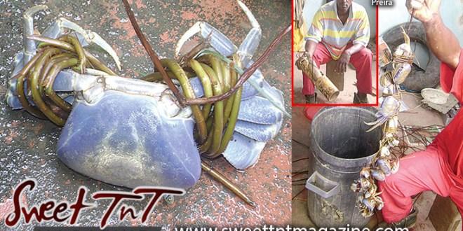 Crab tied, Herman, bucket of crab, Kielon Hilaire, Sweet T&T, Sweet TnT, Trinidad and Tobago, Trini, vacation, travel,
