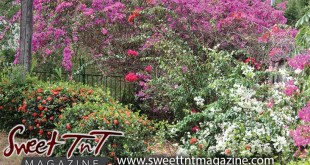 Flower garden, Botanical Gardens, Lord article, Sweet T&T, Sweet TnT, Trinidad and Tobago, Trini, vacation, travel,
