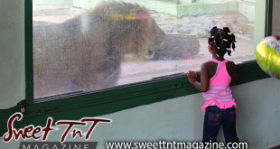 Girl in pink top with colored clips in hair looking at lion through glass at Emperor Valley Zoo in Sweet T&T, Sweet TnT Magazine, Trinidad and Tobago, Trini, vacation, travel