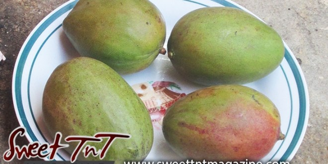 My weakness for Paulover and Julie mangoes, in sweet T&T for Sweet TnT Magazine, Culturama Publishing Company, for news in Trinidad, in Port of Spain, Trinidad and Tobago, with positive how to photography.