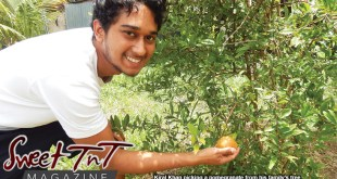 My brother picking a pomegranate from our Pomegranate tree in sweet T&T for Sweet TnT Magazine, Culturama Publishing Company, for news in Trinidad, in Port of Spain, Trinidad and Tobago, with positive how to photography.
