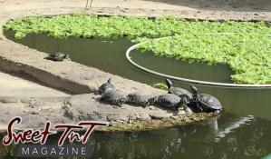 Turtles, Emperor Valley Zoo, Sweet T&T, Sweet TnT, Trinidad and Tobago, Trini, travel, vacation, animals