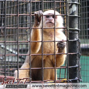 Monkey, Emperor Valley Zoo, Sweet T&T, Sweet TnT, Trinidad and Tobago, Trini, travel, vacation, animals, Zoorific