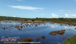 Icacos brown grass in swirl water green grass blue sky view by Marika Mohammed for story Icacos end of Trinidad in Sweet T&T, Sweet TnT, Trinidad and Tobago, Trini, vacation, travel