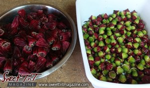 Sorrel or roselle red fruit peeled with seeds for planting for Christmas season or health benefits for cholesterol, blood pressure, bladder infections, constipation, maylase, use recipe for good taste and health benefits in in Sweet T&T, Sweet TnT, Trinidad and Tobago, Trini, sorrel juice